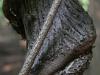 kelly-tree-wooded-trail-2011-cold-spring-ny-photo-24x21