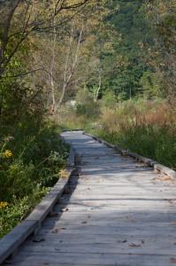 Great Swamp boardwalk, Pawling, NY