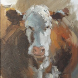 White and Brown Cow.MSS